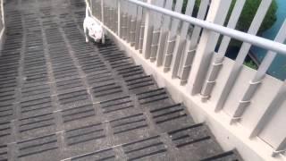 ラグくん6ヶ月。 ちょっと前までは怖々登っていた階段。 もう大丈夫だね...