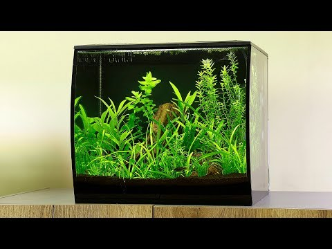 How to Aquascape a Fluval Flex
