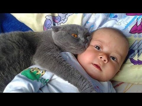 Cutest Baby Playing With Cats