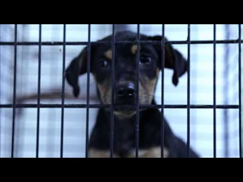 '600 Miles Home' Dog Rescue Documentary