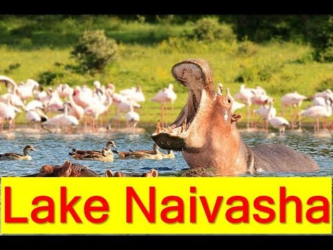 Lake Naivasha (Rift Valley Province, Kenya)