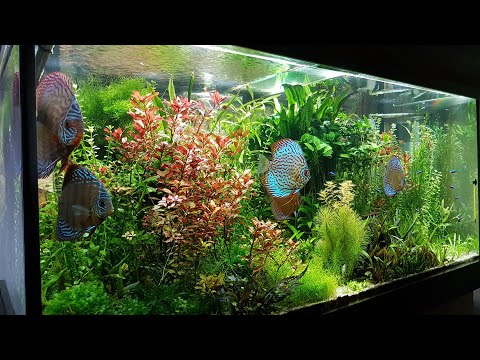 600L Planted Discus Tank over 1300 days