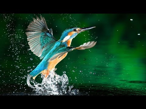 Wildlife Nature of Thailand - National Geographic Documentary