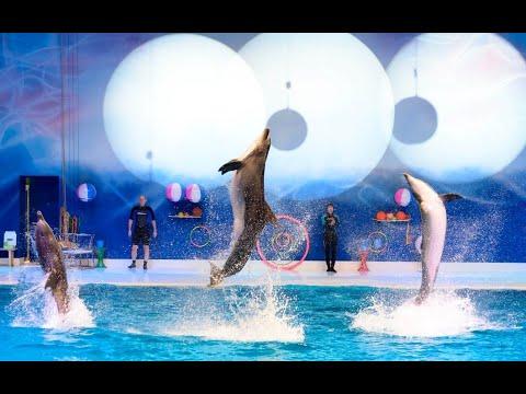 Dolphin Show at the Dubai Dolphinarium