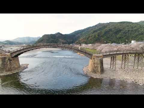 """やまぐち映像図鑑 NO.151 「錦帯橋(桜)」/ YAMAGUCHI MOVIE BOOK NO.151 """"Kintaikyo Bridge(Cherry Blossoms)"""""""