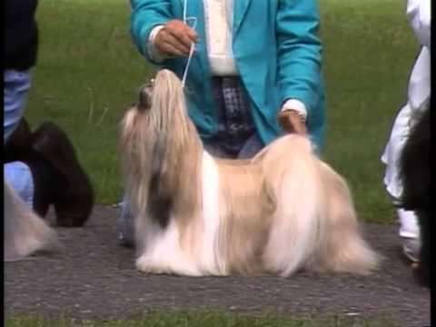 Shih Tzu - AKC Dog Breed Series