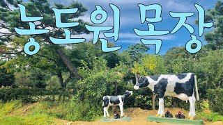 가을날의 용인목장 농도원목장 체험 소젖짜기,치즈만들기