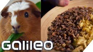 Essen die echt Meerschweinchen? Surprise Box aus Peru   Galileo   ProSieben