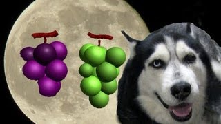 love dogs grapes supper Grandmother husky dog cookie クッキーは果物...
