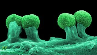 Prebiotika: péče o naši vnitřní zahradu