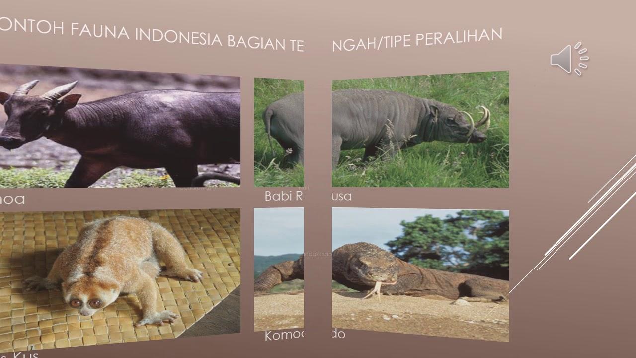 6700 Gambar Fauna Tipe Peralihan HD Terbaru