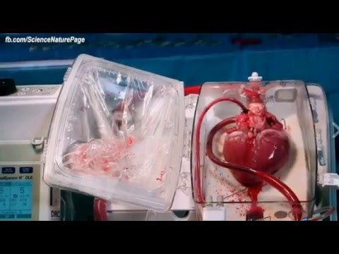 No More Heart attack This Device Can Bring Dead Hearts Back to Life.