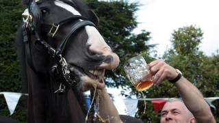 Toby Keith Ft  Willie Nelson  ,,,Beer For My Horses