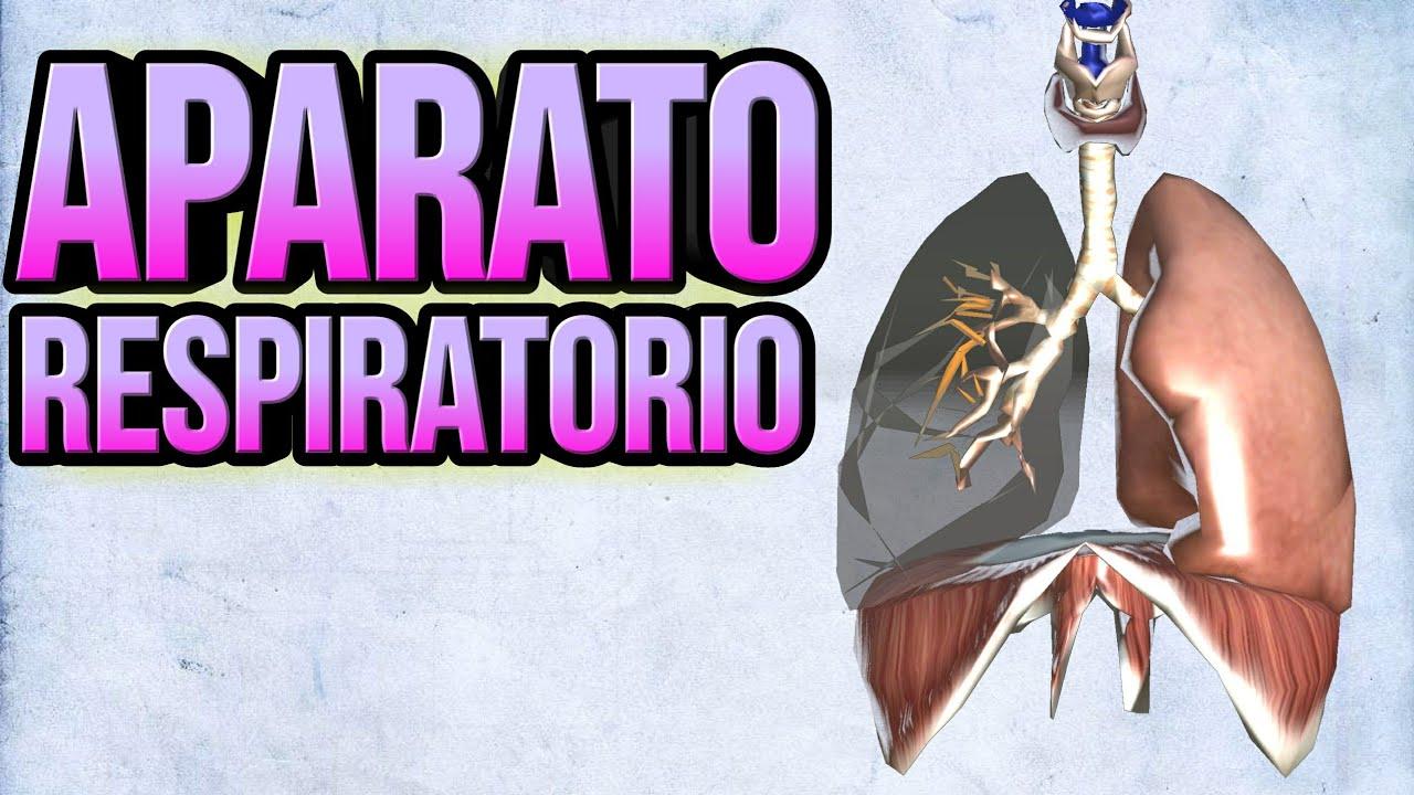 Aparato respiratorio (Anatomía y fisiología) - YouTube