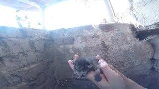 Новосибирский диггер спас пятерых котят и кошку из бетонного кармана