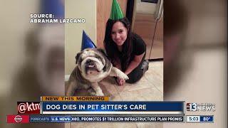 Dog dies in pet sitter's care