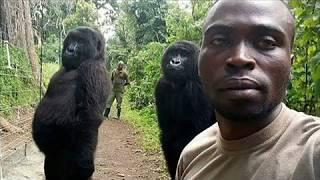 'Selfie' de guardabosques con dos gorilas da vuelta al mundo