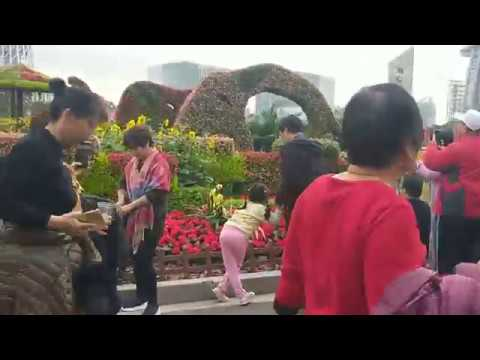 Chinese Traditional Culture of Admiring Flowers in Guangzhou Local Tour Guide Guangzhou Guided Tour