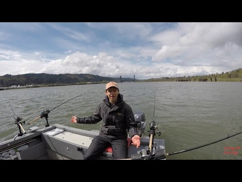 Quick spring chinook fishing report april 8 2017 on the for Willamette river fishing report