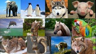 Звуки животных видео для детей