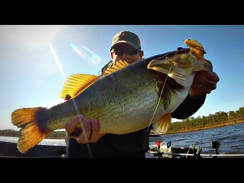 Spring topwater bass fishing contest hosted by bamabass for Topwater bass fishing