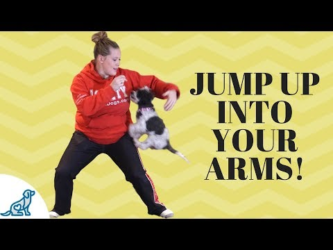 How To Teach Your Dog To Jump Up Into Your Arms