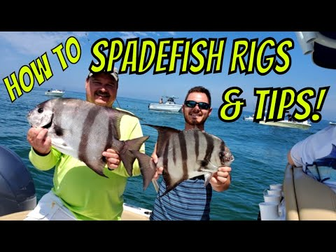 How To Spadefish, Rigs And Tips (Tutorial!)