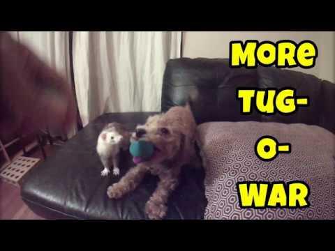More Tug-O-War! - Cute Animals Inside 4 - VOL. 57