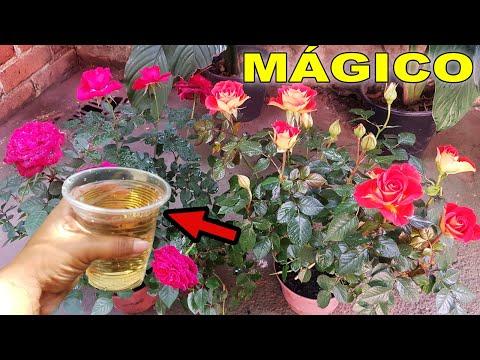 👉 Suas Plantas VÃO ENCHER DE FLOR  Com Esse ADUBO CASEIRO TOP E  PODEROSO!! 🌸🌸🌸