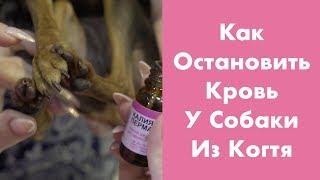 Как остановить кровь у Собаки из Когтя