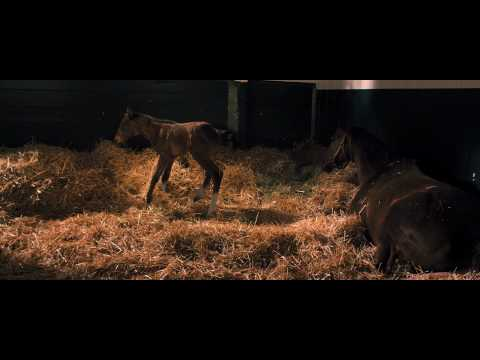 Secretariat | Trailer US (2010)