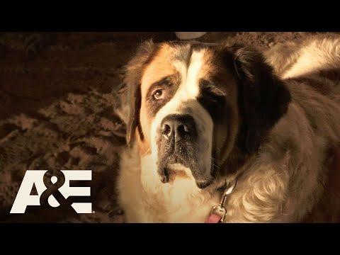 Live PD: Abandoned St. Bernard (Season 2) | A&E