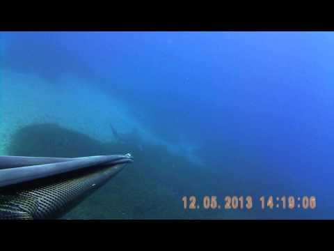 Καρχαρίας Ρόδος Shark Greece