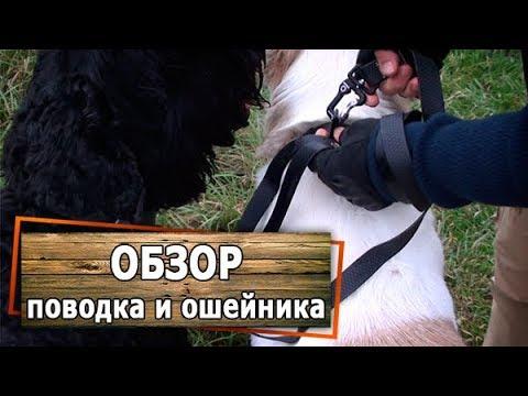 Обзор и тест поводка и ошейника COLLAR EVOLUTOR