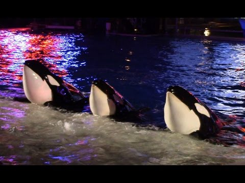 Shamu Christmas Miracles (Full Show) at SeaWorld San Diego on 12/13/15.