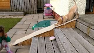 女の子も大笑い! スロープで遊ぶ犬
