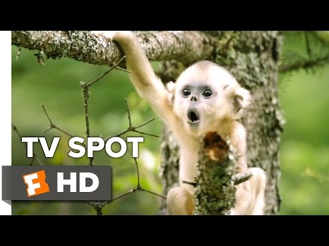 Born in China TV Spot - Now Playing! (2017)   Movieclips Coming Soon
