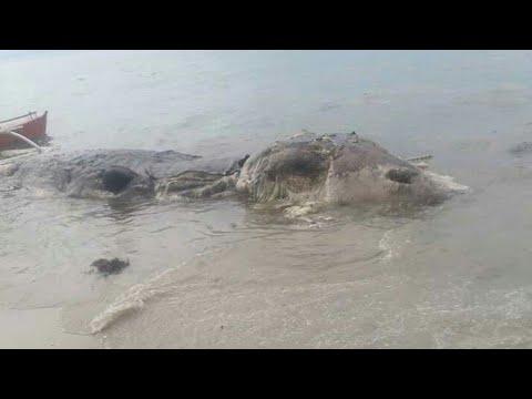 Sea Creature  in Maasin City