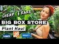 HOUSEPLANT HAUL IN BIG BOX STORE NURSERIES | Home Depot, Lowe's, Walmart Plant Tour | Los Angeles