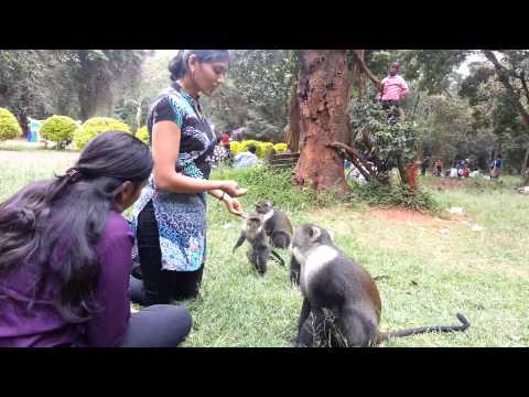 City Park Nairobi Kenya. .