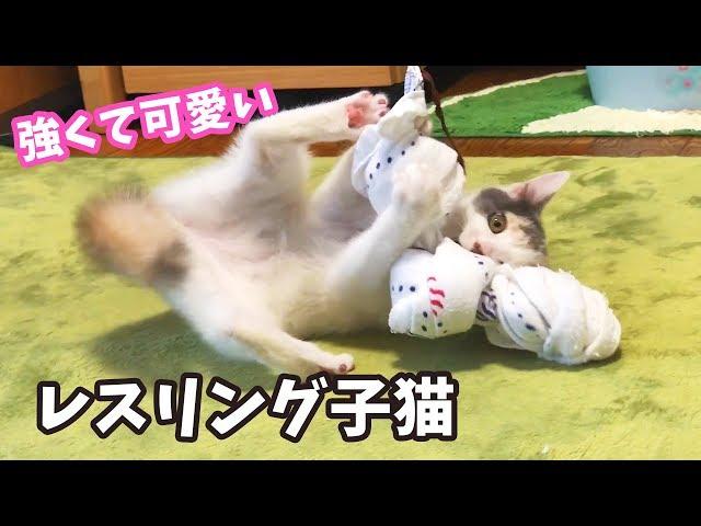 タオル相手にプロレスごっこをする子猫