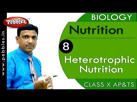 Heterotrophic Nutrition :  Nutrition | Biology | Science |  Class 10