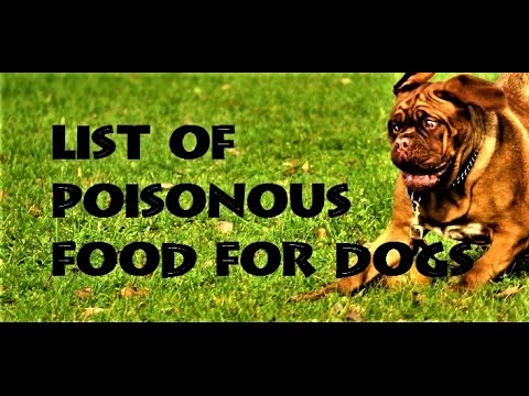 LIST OF POISONOUS FOOD FOR DOGS