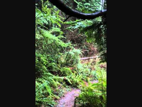 Hiking Peters Trail On Bainbridge Island Wa