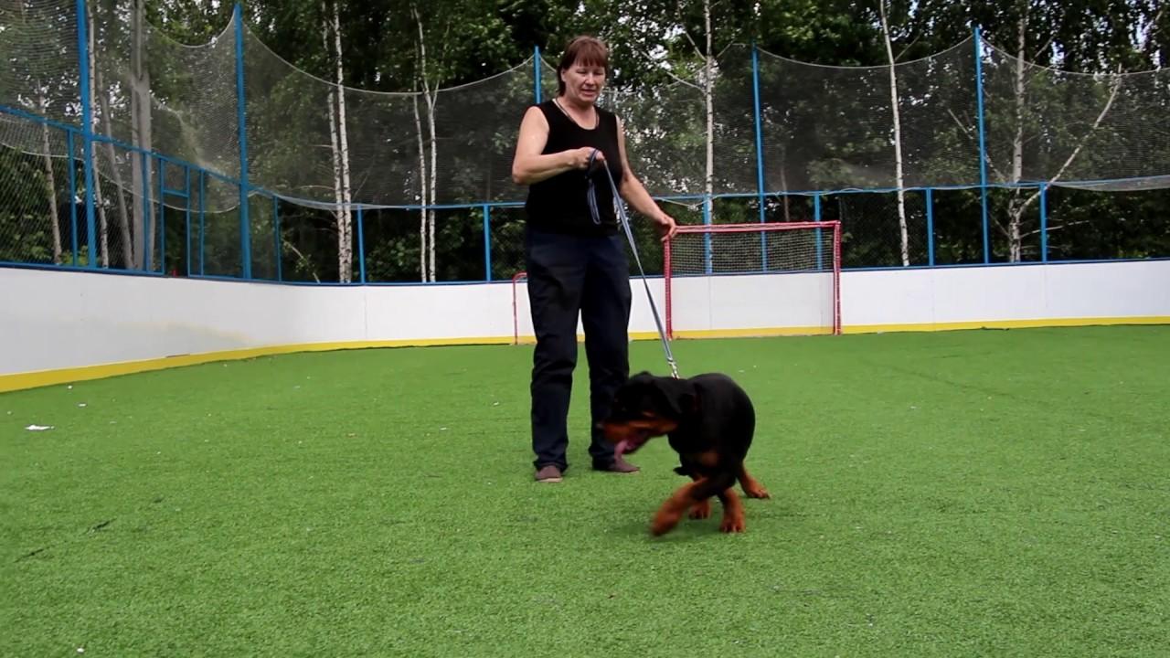 Крупнейшая доска объявлений, специализируется на купле-продаже породистых собак и щенков.