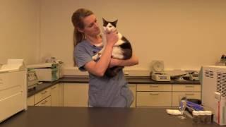 Følg prevalensstudie på kattens lungeorm på Vestlandet thumbnail