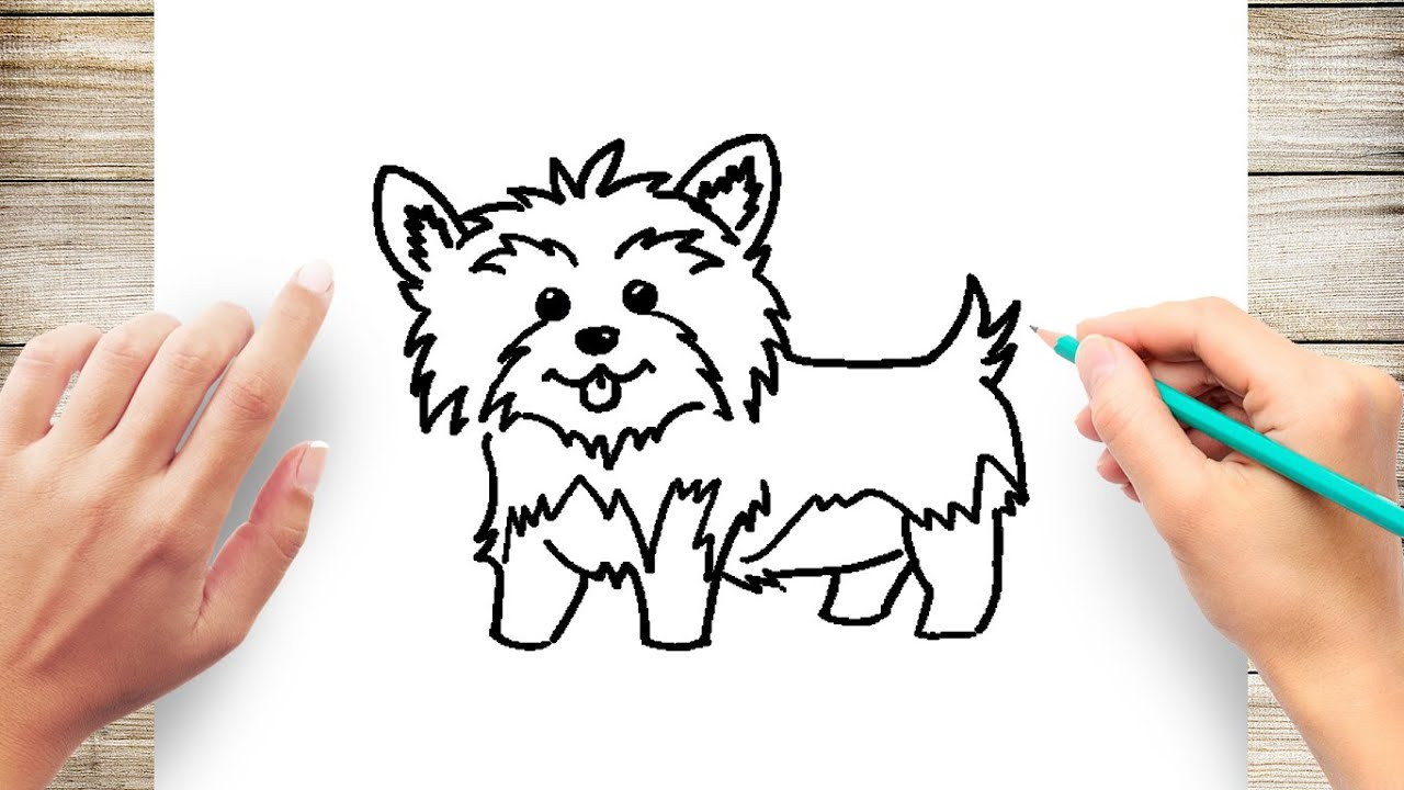 How To Draw A Yorkie Step By Step