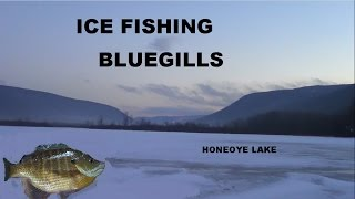Ice Fishing Big Bluegills