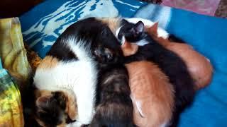 3 недели спустя. Котята сильно подросли