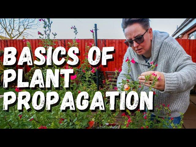 Basics of propagating from cuttings  |  Propagation Station